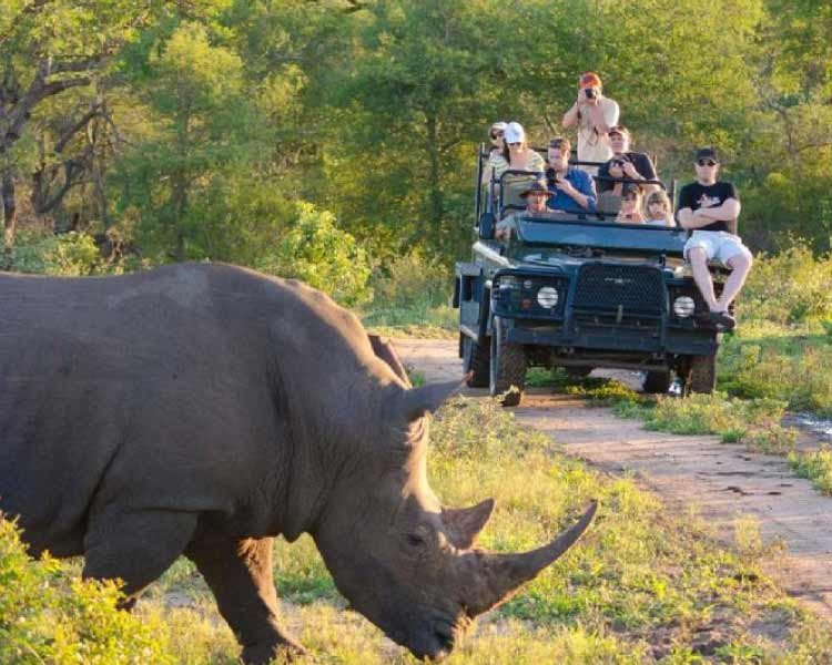 Thornybush Luxury Game Lodge
