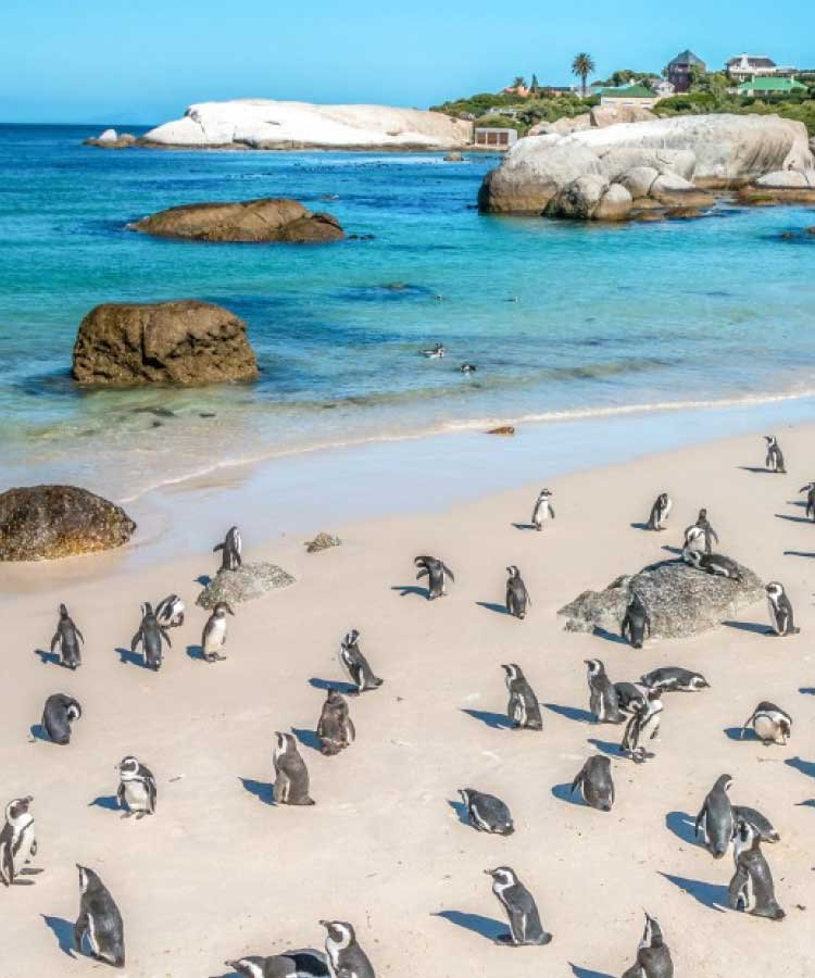 Cape of Good Hope & Penguins